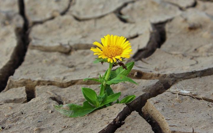 Crescimento Pós-Traumático